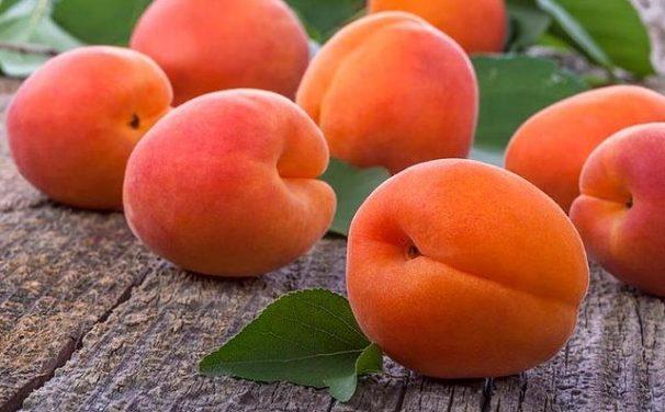 Odrůdy našich meruněk